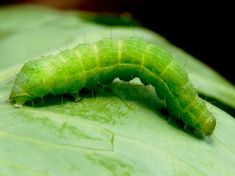 Do You Have Any Caterpillars In Your Life?